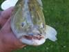 Gemeinschaftsfischen der Jugend des ASV-Overhaken